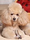 Pet Groomer in Hollywood, FL