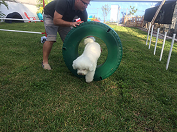 Dog Obedience Training in Hollywood, Florida