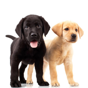 Doggie Daycare in Hollywood, FL